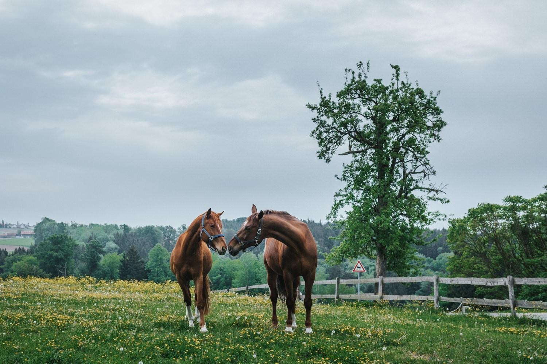 freie Trauung auf Gut Aichet, 2 Pferde vor dem Gut