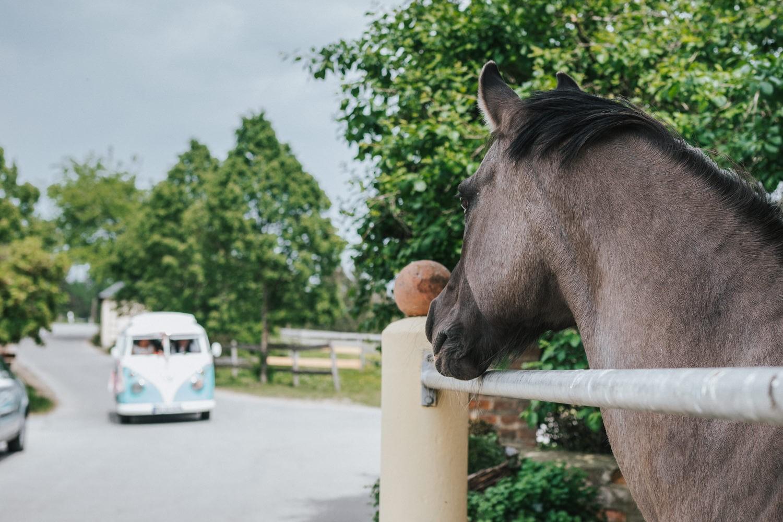 freie Trauung auf Gut Aichet, Pferd beobachtet die Ankunft der Braut