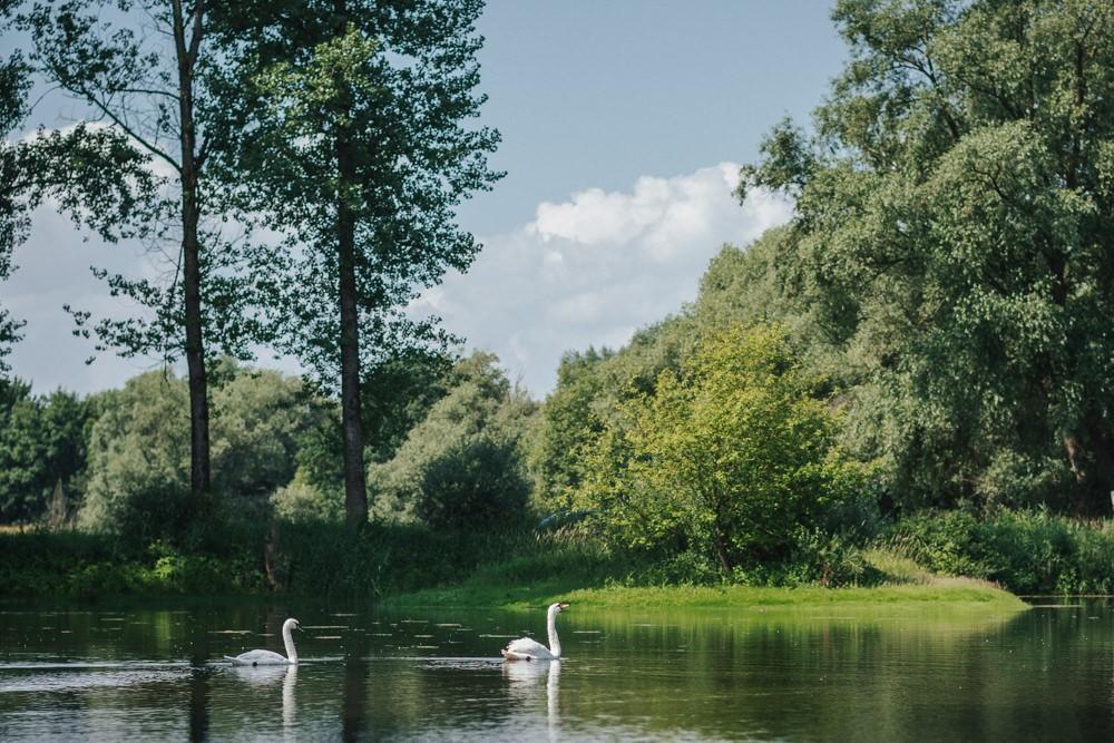 Hochzeit in Deggendorf, Paarshooting am Donauufer, Schwäne schwimmen im See