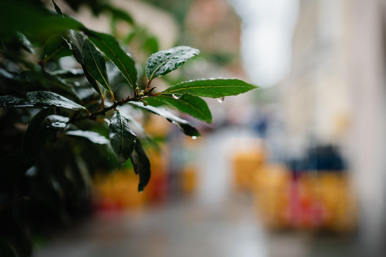 Hochzeit im Standesamt Passau, Regentropfen an den Pflanzen